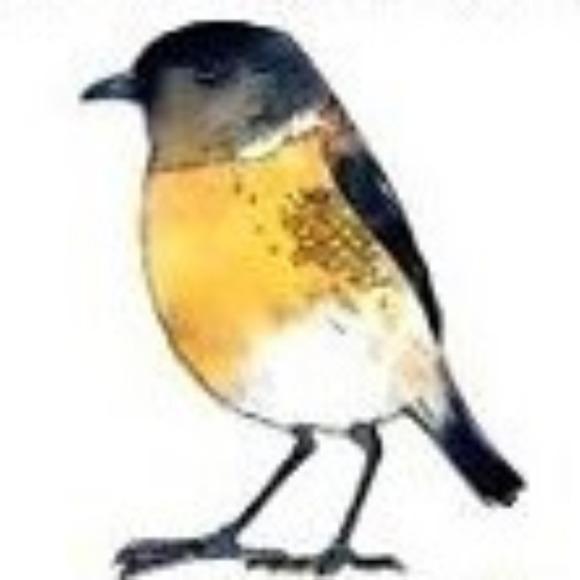 littlegrassbird